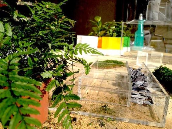 box in plexi trasparente - design del giardino - e commerce