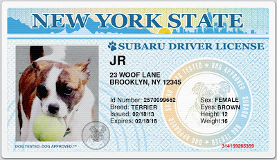 Driver's Licenses for Dogs