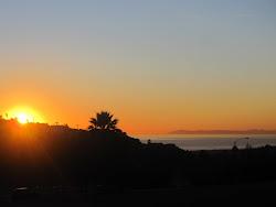 Beech at Sunset