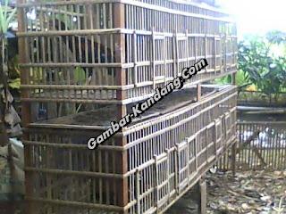 wow bikin kandang ayam bangkok biayanya sampai 800 ribua