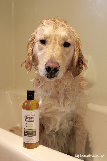 4 Legger organic dog shampoo review and giveaway
