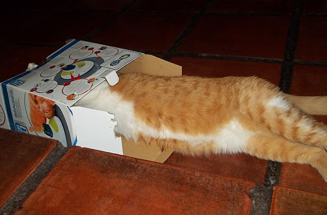 Caixa do Cat It Design Senses