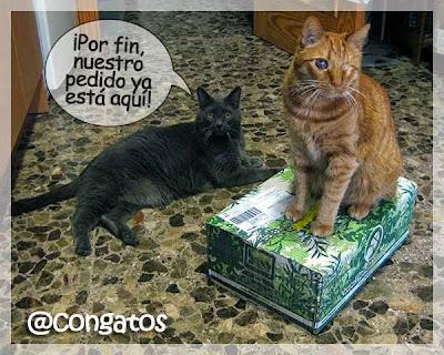 Gatos y pedido
