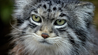 Cats Eye Wallpaper