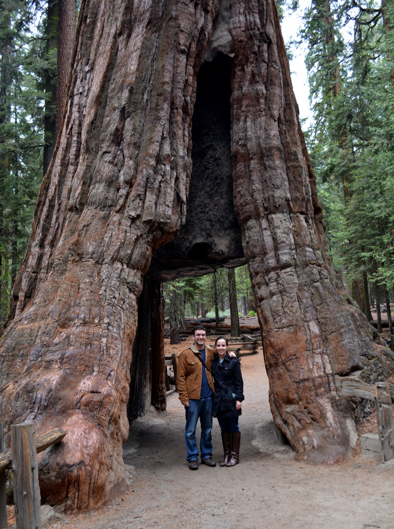 cozy birdhouse | mariposa grove at yosemite, california tunnel tree