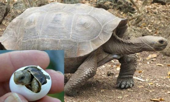 Nacen tortugas en Galápagos después de 100 años