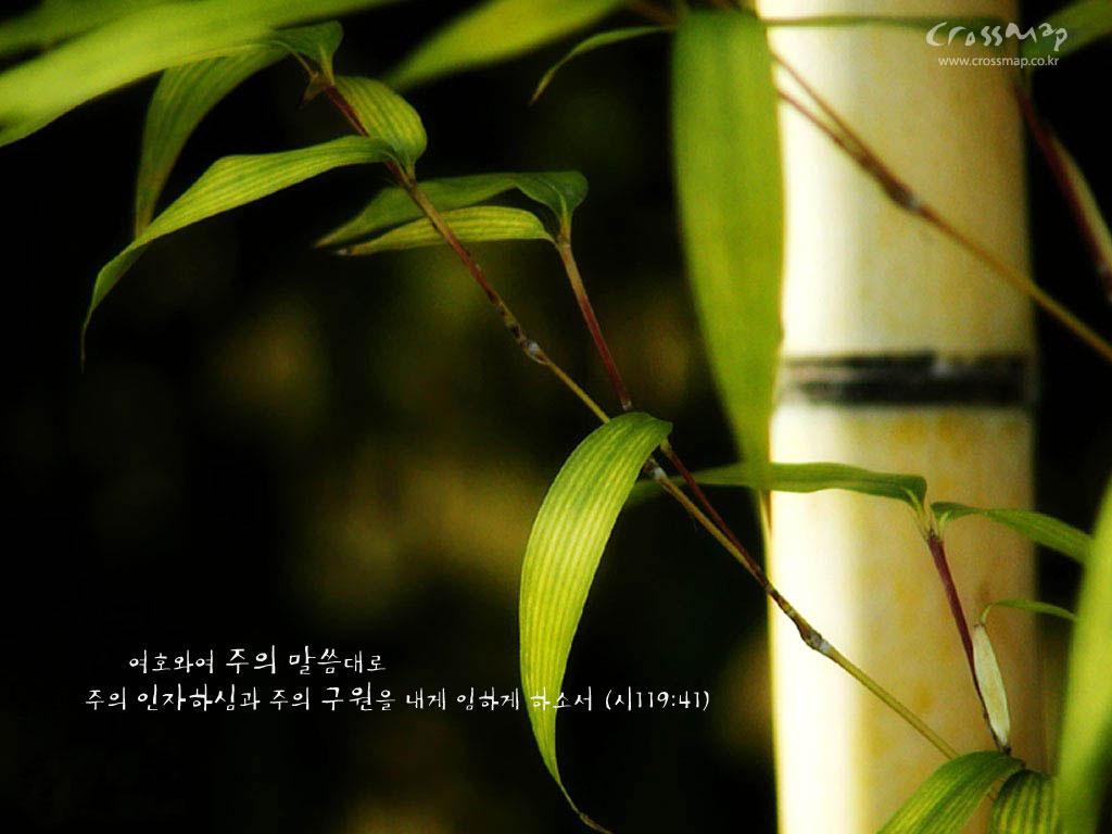 http://4.bp.blogspot.com/-OjGxKgSnbrc/Tq0qh1Vs_AI/AAAAAAAABhM/ef_tVRLMxCU/s1600/bamboo-wallpapers_1024x768_15590.jpg