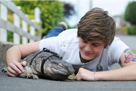 Big Pet Lizards But The Lizard is Too Big For