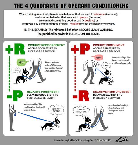 Alguns Factos sobre Treino Canino 5383389900_5175a0643c