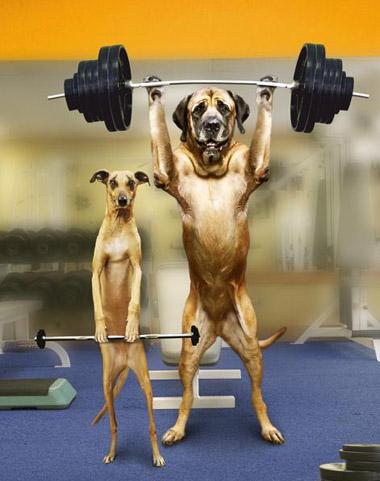 http://4.bp.blogspot.com/-OjYUgY2JjsU/Tbj4V6_KCJI/AAAAAAAABfw/tirhzCyPXkg/s1600/funny-dogs-gym.jpg