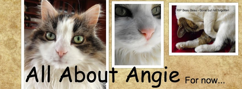 All About Angie