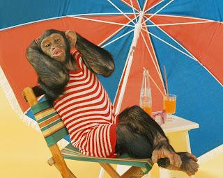 Fotos de chimpances vestidos de mujer