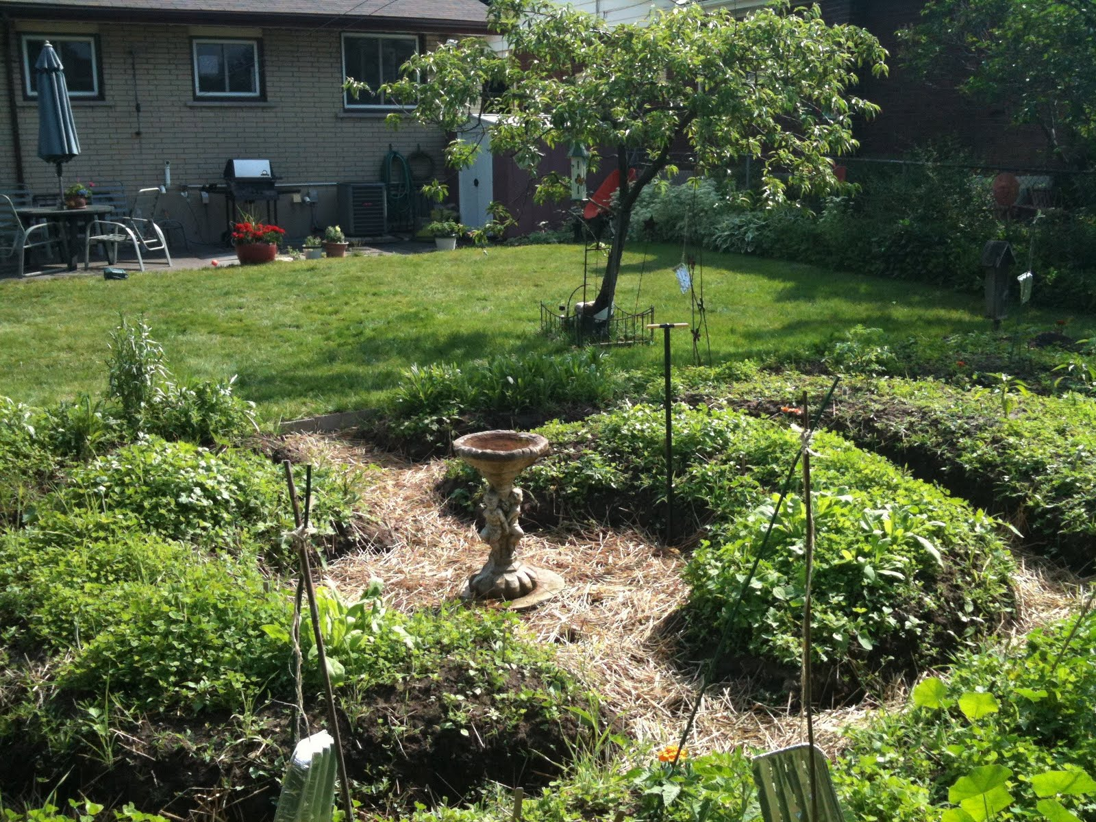 Growing secrets garden update permaculture what do for Permaculture garden designs