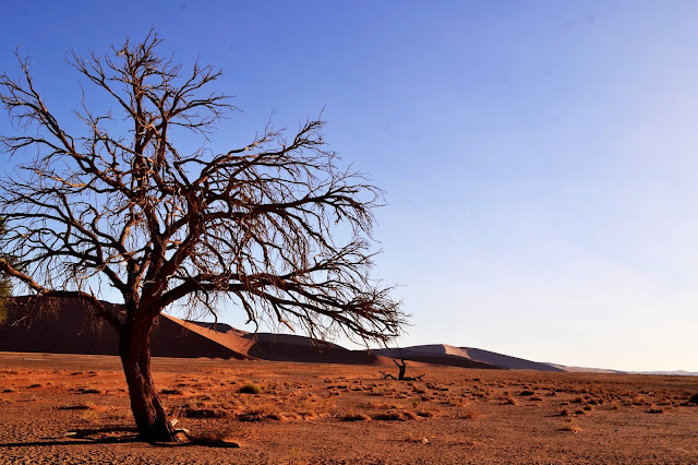 Trees and Dunes in Namibia, Sossusvlei