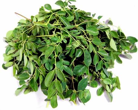 Cây Chùm Ngây Moringa tác dụng chữa bệnh và dinh dưỡng