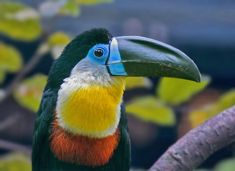 Brilliant Colors Of The Toucans Exterior Design