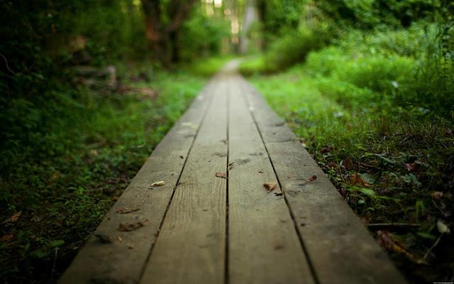Jalan Keluar dari Fitnah, Fitnah syahwat dan syubhat