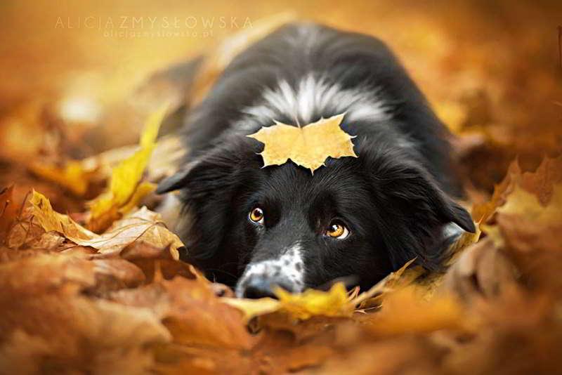 dog-photography-alicja-zmyslowska-03