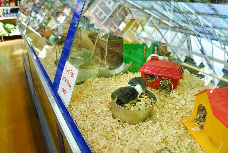 Les animaux vendus en animalerie au coeur du probl me for Animalerie poisson