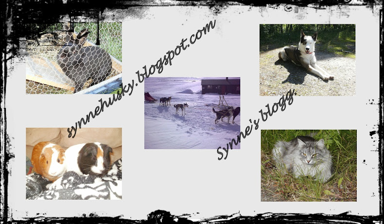Synne's blogg