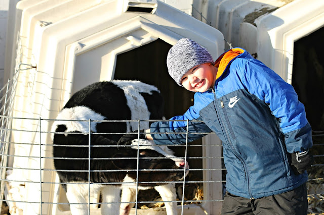 Visiting the calves at Whispering Pines farm in Elroy, WI