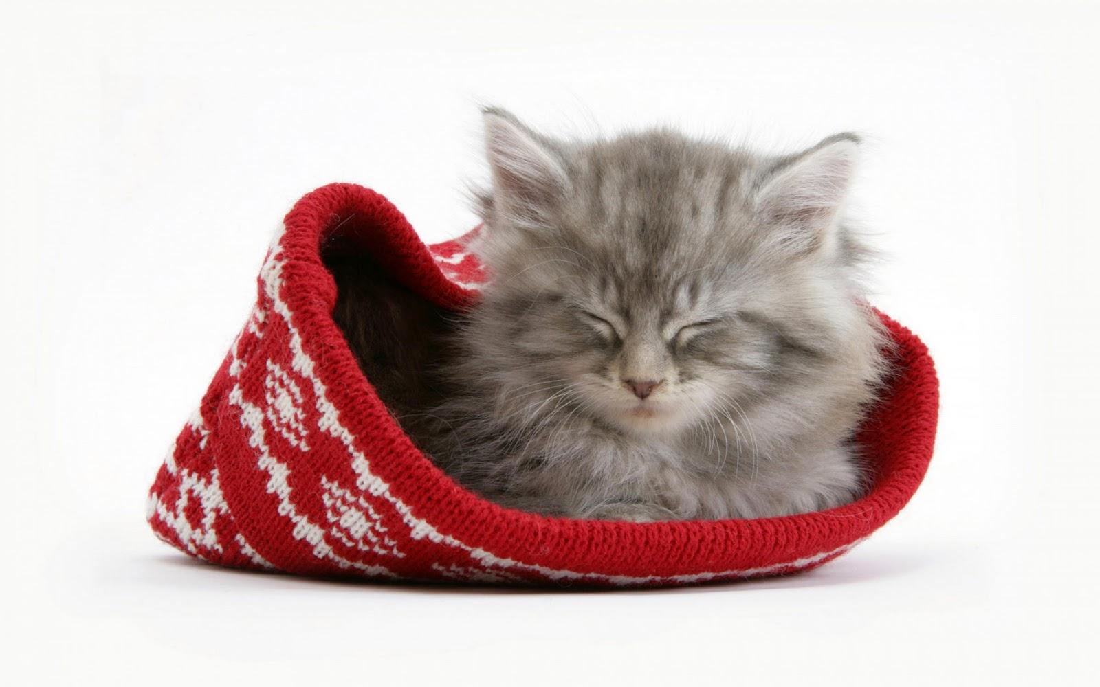 http://4.bp.blogspot.com/-OlIruYqLBcY/TwwYgaqOV2I/AAAAAAAABRQ/JCexmdAgVEE/s1600/cute+cat+wallpaper%250A5.jpg