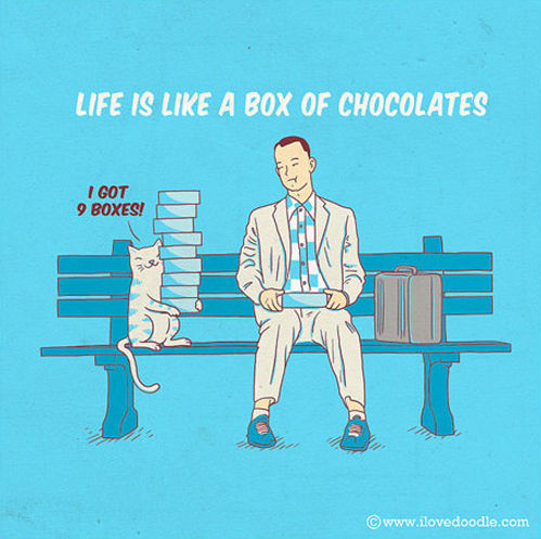 Life Is like A Box Of Chocolates - Human vs Cat