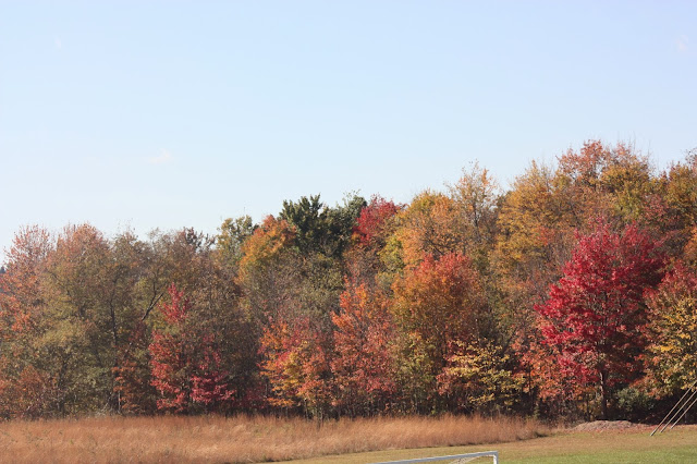 Field lined with trees in fall colours of red and yellow