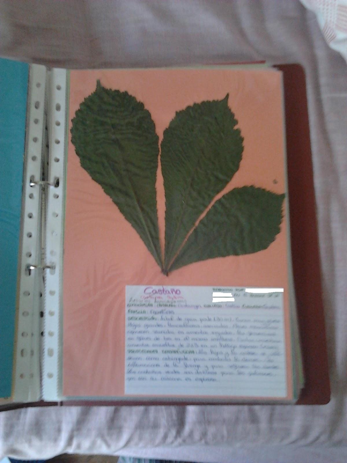 contemplando el vacio   u00bfc u00d3mo hacer un herbario m u00c1gico