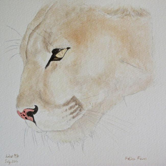 Feline Focus