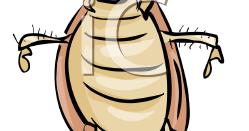 how to make vegas roach trap
