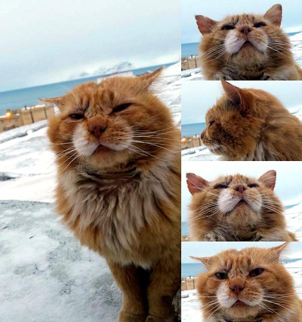 barentsburg svalbard cats