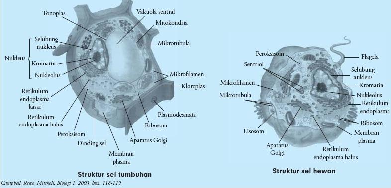 Perbedaan-sel-hewan-sel-tumbuhan.jpg