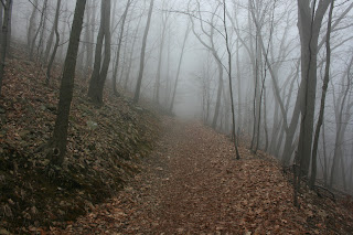 A foggy morning hiking on Mount Beacon.