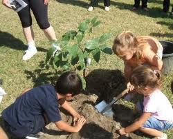 plantar plantas