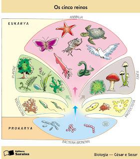 los 5 reinos de los seres vivos reino monera diferencias son organismo