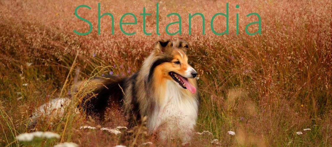 Shetlandia