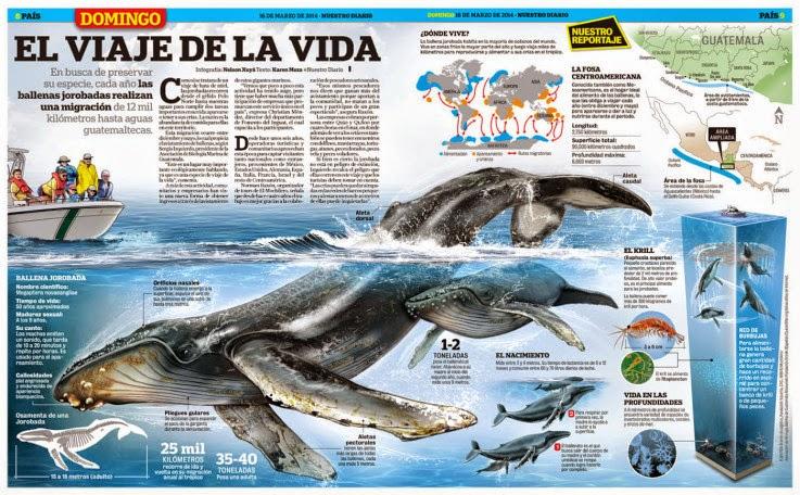 Info animales: HÁBITAT Y DISTRIBUCIÓN DE CETÁCEOS