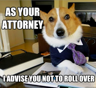 Dog Lawyer Meme