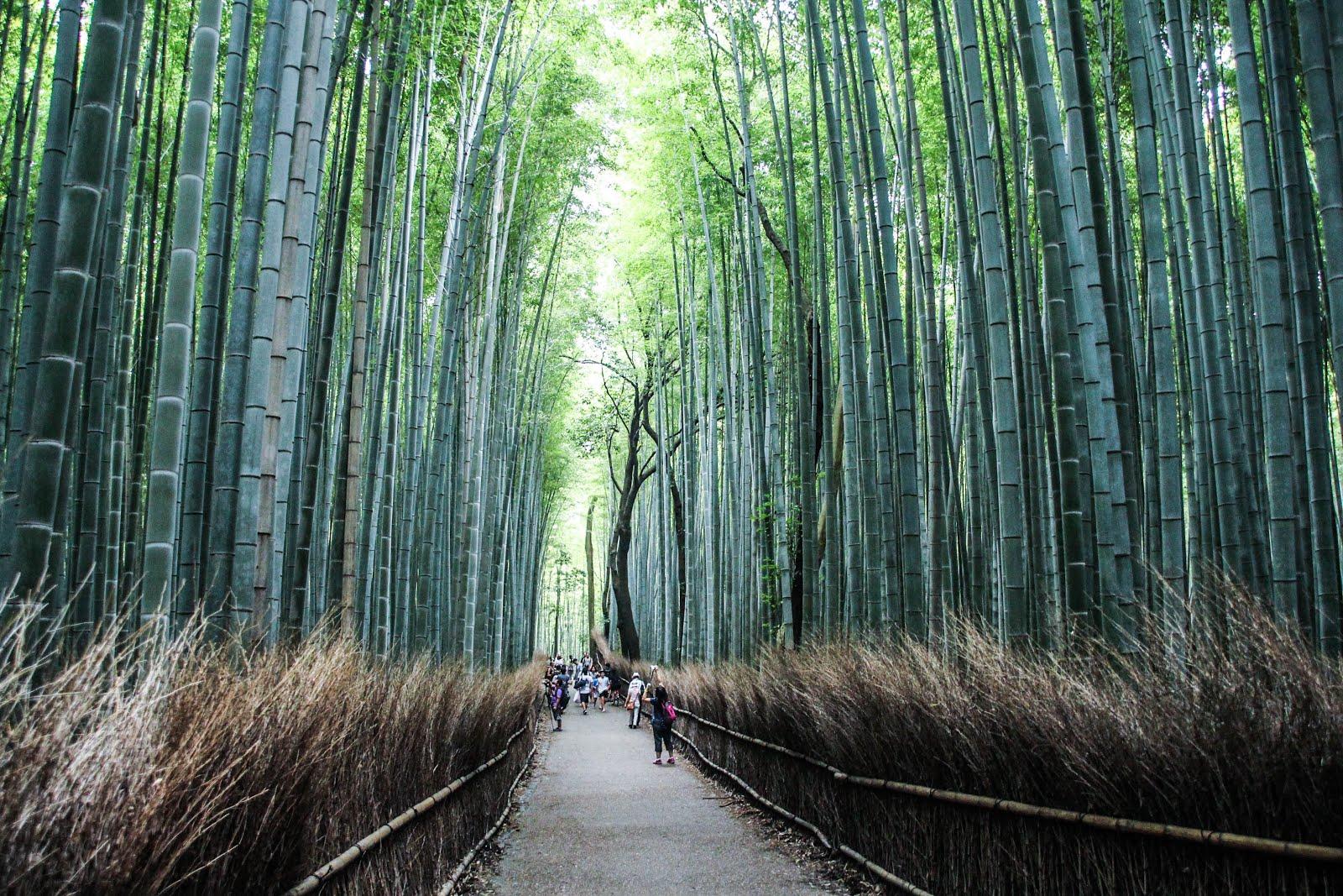 嵐山(日本-關西)