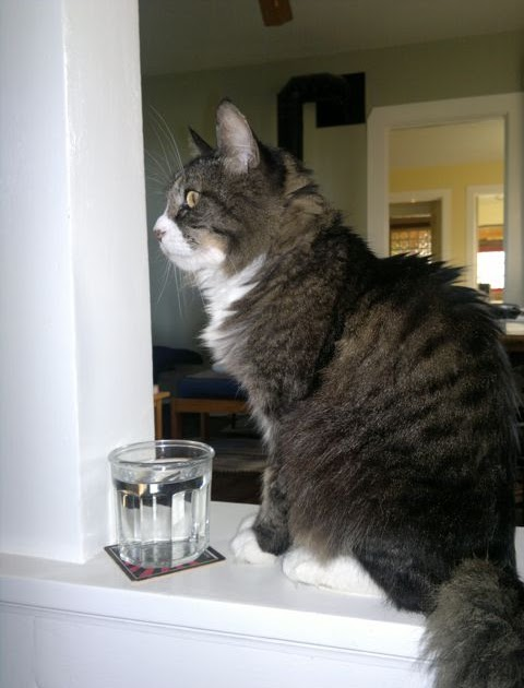 Urine Off Cats Uk