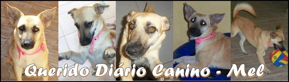 Querido Diário Canino - Mel