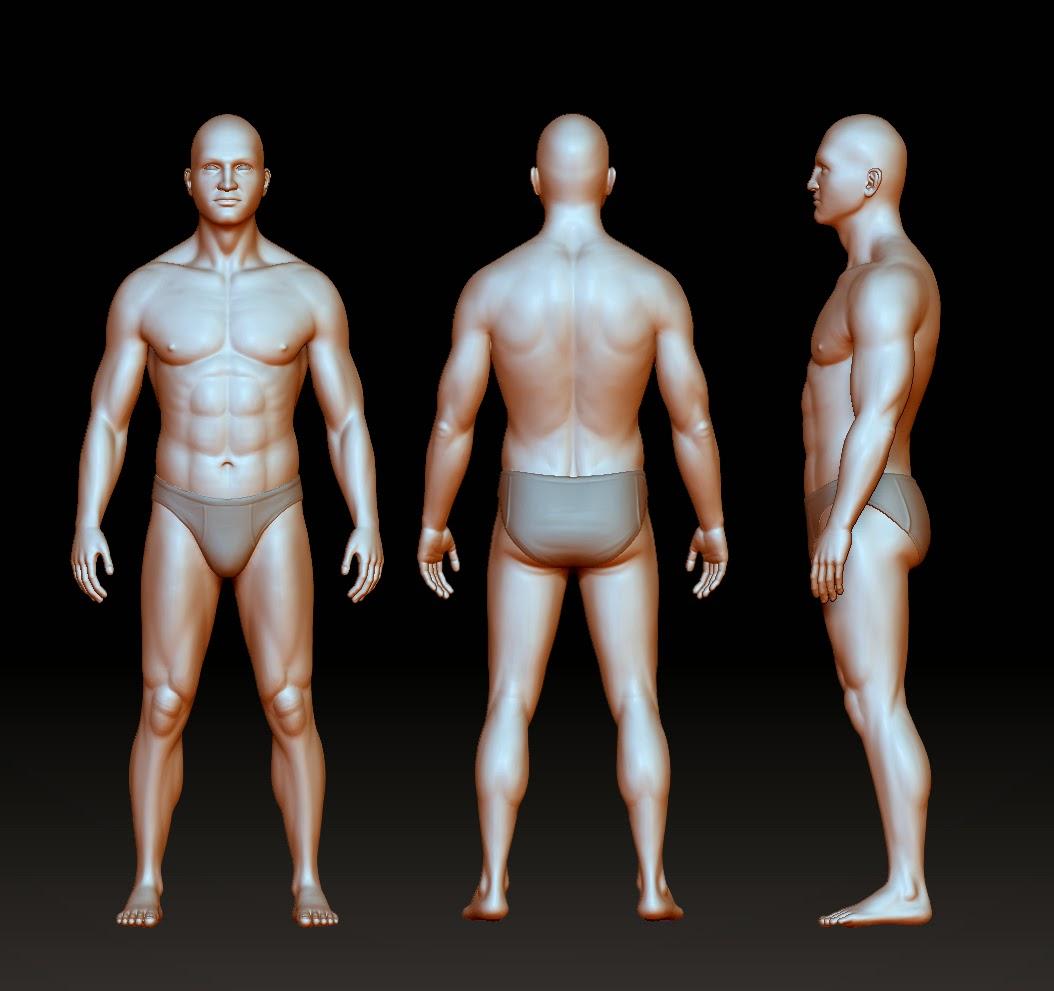 Male Anatomy | Prateek Works