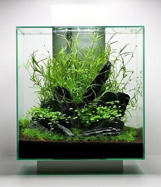 Aquascape aquascape project for California fish planting