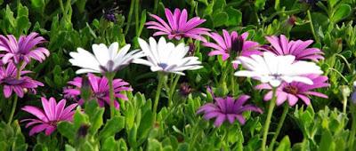 Delitos y proteccion de la flora