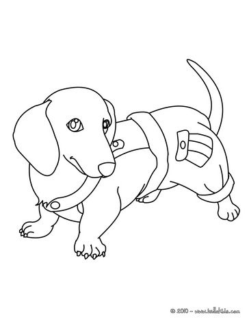 Jack Russell En Jachtluipaard further Stock Images Isolated Two Dachshund Puppies Sitting Cute White Background Image35344554 further Great 20idea 170129 further Beauty And The Beast Clipart besides Chibi Lps Kitten 649 542711656. on dachshund drawings