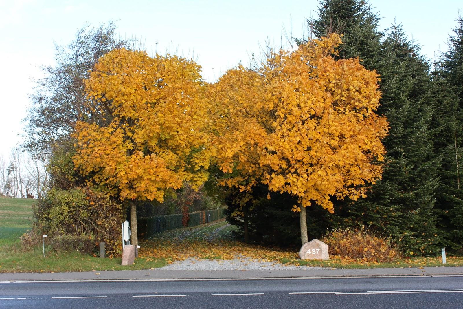 træer til indkørsel