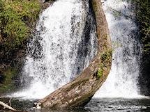 Duvall Cherry Creek Falls Trail WA