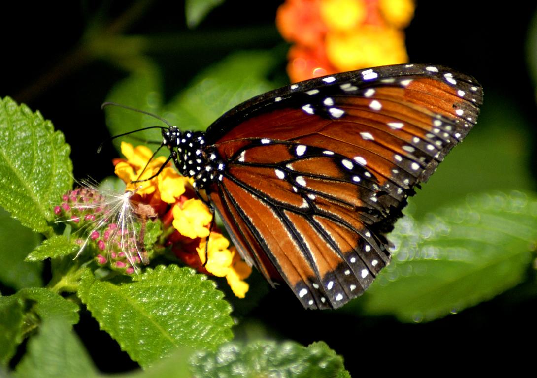 http://4.bp.blogspot.com/-OpPoJ-YhGeI/UPaJ0by1O2I/AAAAAAAAKbo/4MflfOuuny4/s1600/Butterfly+Wallpapers+12.jpg