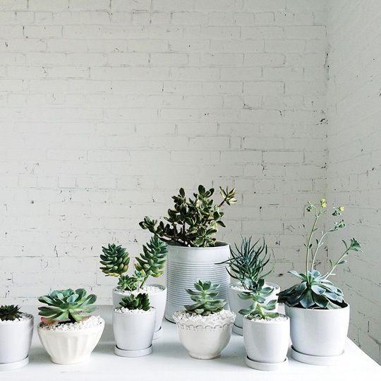 Decor inspiration succulents cactus sanseveria and plants cool chic style fashion - Cool succulent plants ...